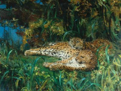 Indian Leopards-John Macallan Swan-Giclee Print