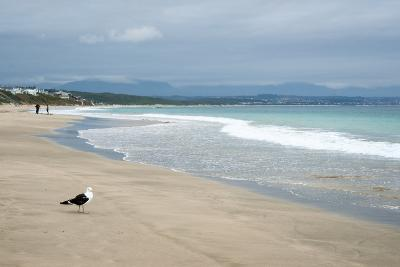 Indian Ocean Shoreline, Mosselbay, Garden Route, Western Cape, South Africa, Africa-Kim Walker-Photographic Print