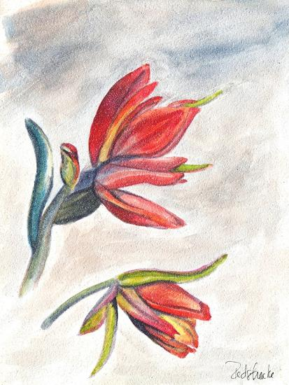 Indian Paint Brush-Jennifer Redstreake Geary-Art Print