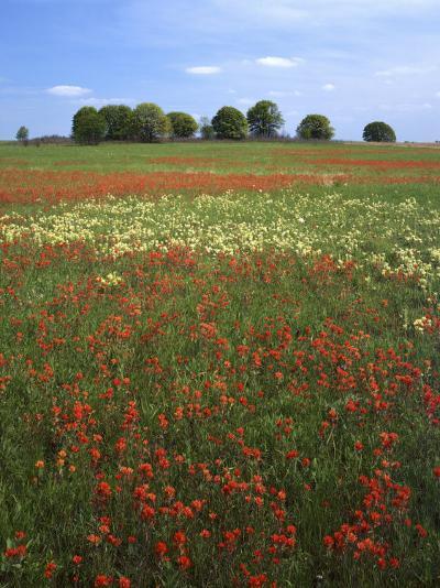 Indian Paintbrush meadow, Taberville Prairie Natural Area, Missouri, USA-Charles Gurche-Photographic Print