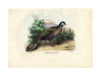 Indian Peafowl, 1863-79-Raimundo Petraroja-Giclee Print