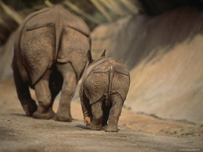 Indian Rhinoceros and Her Baby at a Zoo, San Diego, California-Michael Nichols-Photographic Print