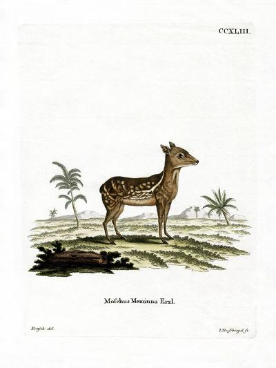 Indian Spotted Chevrotain--Giclee Print