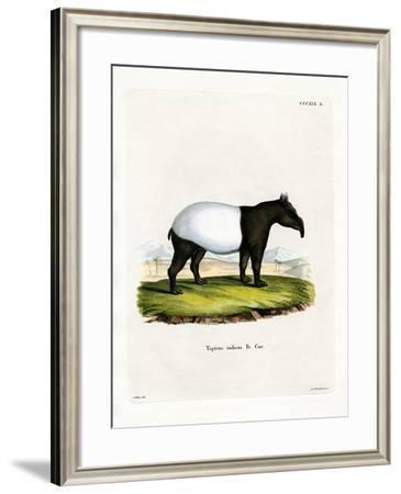Indian Tapir--Framed Giclee Print