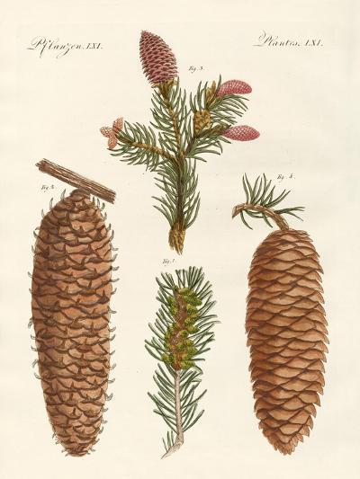 Indigenous Coniferous Woods--Giclee Print