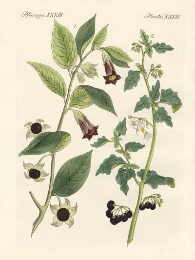 Indigenous Poisonous Plants--Giclee Print