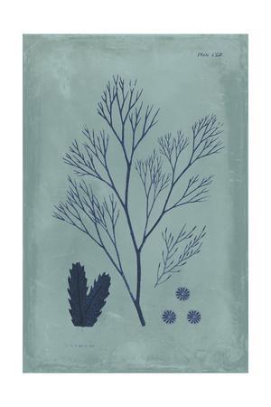 https://imgc.artprintimages.com/img/print/indigo-and-azure-seaweed-v_u-l-pwc9jn0.jpg?p=0