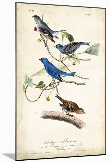 Indigo Bunting-John James Audubon-Mounted Art Print