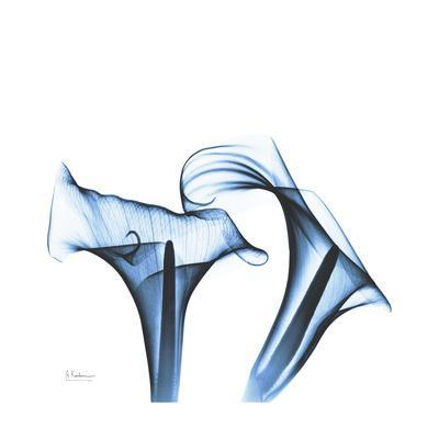 https://imgc.artprintimages.com/img/print/indigo-calla-lilies-d_u-l-pyjr5f0.jpg?p=0
