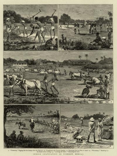 Indigo Cultivation in Tirhoot, Bengal--Giclee Print