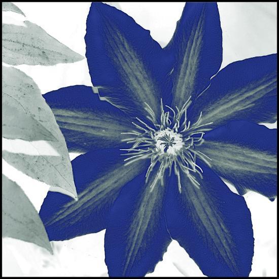 Indigo Star III-Sharon Chandler-Art Print