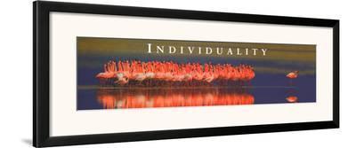 Individuality: Flamingos--Framed Art Print