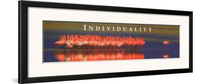 Individuality: Flamingos