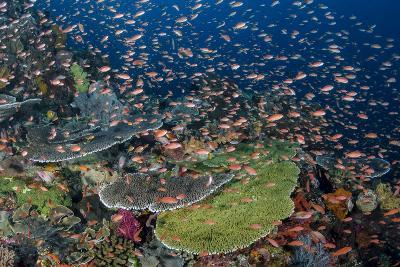 Indonesia, Alor Island. Coral Reef Scenic-Jaynes Gallery-Photographic Print