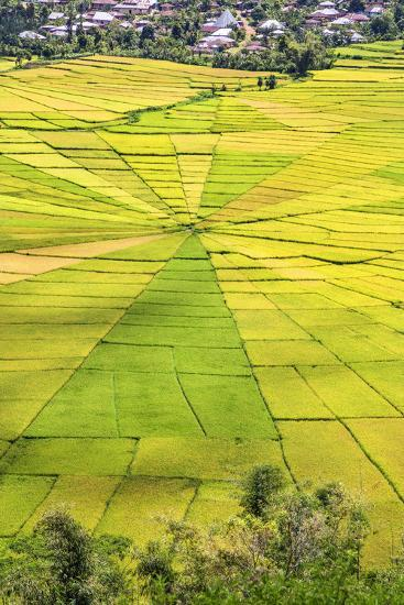 Indonesia, Flores Island, Cancar. the Attractive Spider S Web Rice Paddies Near Ruteng.-Nigel Pavitt-Photographic Print
