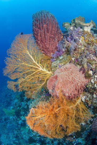 Indonesia, Forgotten Islands. Coral Reef Scenic-Jaynes Gallery-Photographic Print