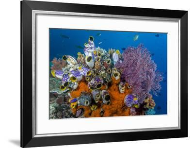 Indonesia, West Papua, Raja Ampat. Coral Reef and Fish-Jaynes Gallery-Framed Photographic Print