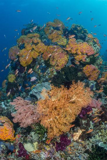 Indonesia, West Papua, Raja Ampat. Coral Reef and Fish-Jaynes Gallery-Photographic Print
