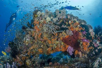 Indonesia, West Papua, Raja Ampat. Diver and Coral Reef-Jaynes Gallery-Photographic Print