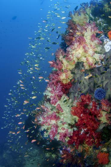 Indonesia, West Papua, Triton Bay. Coral Reef Scenic-Jaynes Gallery-Photographic Print