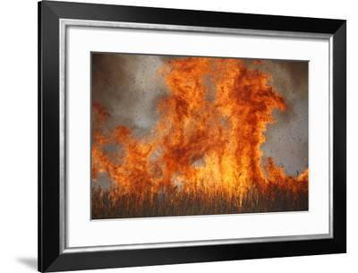 Inferno in Reedbeds, South Africa-Richard Du Toit-Framed Photographic Print