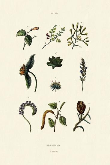 Inflorescence, 1833-39--Giclee Print