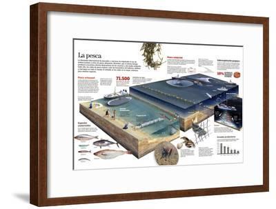 Infografía De Las Diversas Técnicas De Pesca Artesanal Y Comercial--Framed Poster