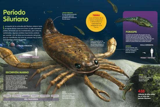 Infografía De Los Animales Del Fondo Oceánico En El Período Silúrico (Hace --Poster