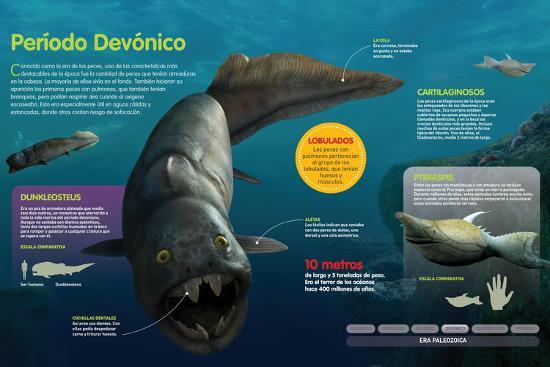 Infografía De Los Peces Que Habitaron a Lo Largo Del Período Devónico (Hace--Poster