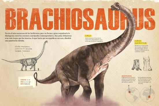 Infografía Del Brachiosaurus Y Las Zonas Donde Se Hallaron Fósiles De Este --Poster