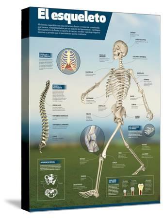 Infografía Del Esqueleto Humano, Detalle De Los Principales Huesos Y Diferencias Entre Sexos--Stretched Canvas Print