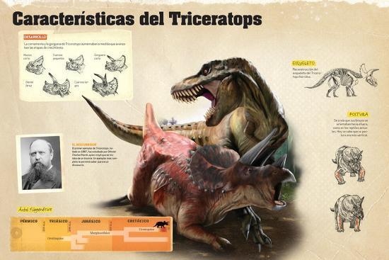 Infografía Sobre Algunas De Las Características Del Triceratops--Poster