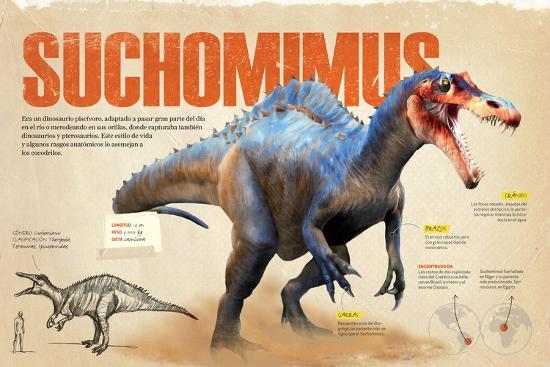Infografía Sobre El Suchomimus, Dinosaurio Piscívoro Del Cretácico, Era Mesozoica--Poster
