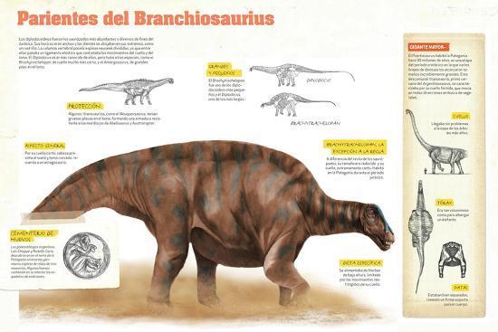 Infografía Sobre Los Diplodocoideos, Durante El Período Jurásico, En El Mesozoico--Poster