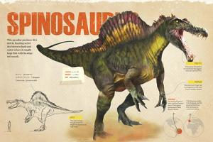 Infographic About the Spinosaurus, a Carnivorous Dinosaur from the Cretaceous Period