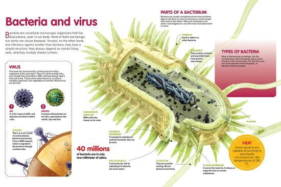 Infographic About Virus and Bacteria--Poster