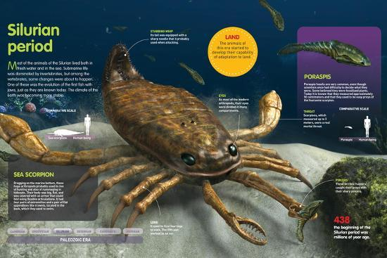 Infographic of the Animals of the Ocean During the Silurian Period (438 Million Years Ago)--Poster