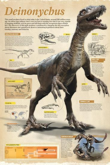 Infographic of the Deinonychus, a Theropod Dinosaur That Lived During the Early Cretaceous Period--Poster