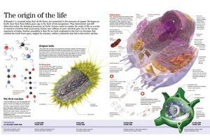 Infographic of the First Forms of Life on Earth, 4.500 Million Years Ago