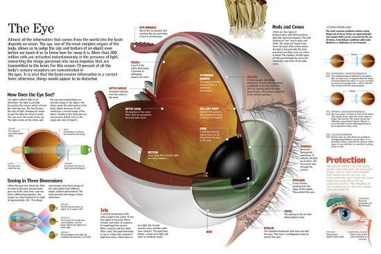 Infographic of the Parts of the Human Eye, their Function and the Most Common Eye Defects--Poster