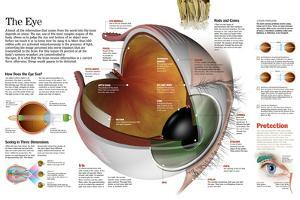 Infographic of the Parts of the Human Eye, their Function and the Most Common Eye Defects