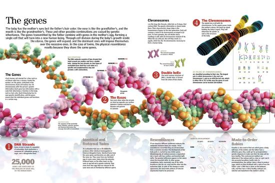 Infographic of the Structure of Dna and the Mechanism of Genetic Inheritance in People--Poster