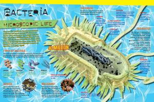 Infographic on Bacteria, the Most Ancient Life Forms on Earth