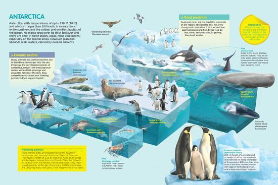 Infographic That Shows the Fauna That Lives in the Coldest Place in the Planet, Antarctica--Poster