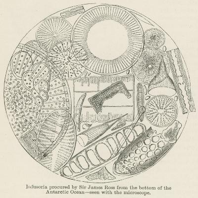 Infusoria Procured by Sir James Ross from the Bottom of the Antarctic Ocean--Giclee Print