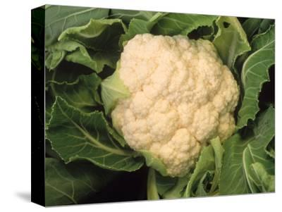 Casa Blanca Cauliflower