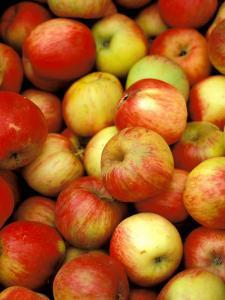 Apples, Ferry Building Farmer's Market, San Francisco, California, USA by Inger Hogstrom