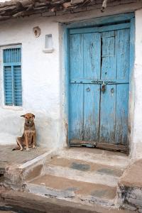 Dog resting outside a house, Jojawar, Rajasthan, India. by Inger Hogstrom