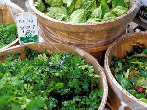 Herbs and Greens, Ferry Building Farmer's Market, San Francisco, California, USA by Inger Hogstrom