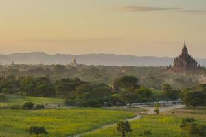 Myanmar. Bagan. Horse Carts and Cattle Walk the Roads at Sunset by Inger Hogstrom